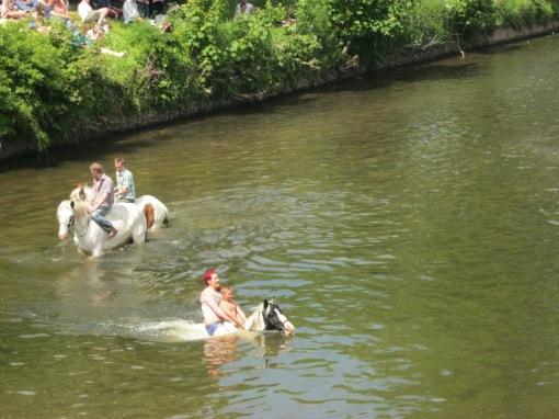AHF - Horse Swimming