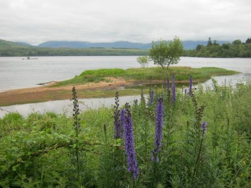 Loch Lochy & Flowers